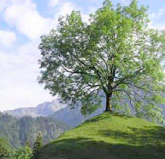 bäume fällen münchen